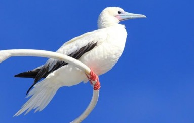 Protecting Endangered Birds from The Brink Of Extinction