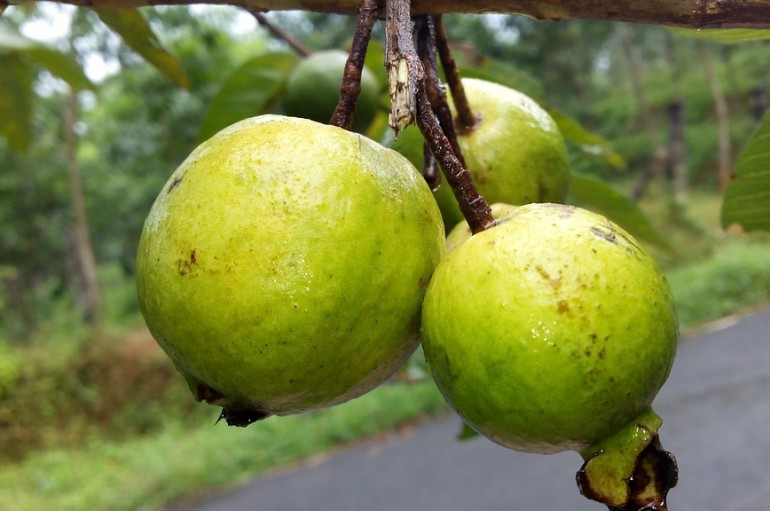 Top 8 Health Benefits Of Guava
