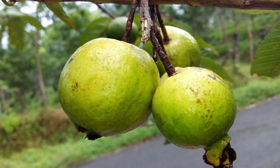 Top 8 Health Benefits Of Guava